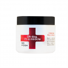 Oh Dog , It's a Miracle Mask